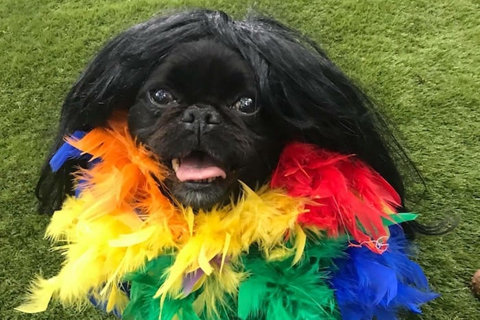 Pampered pooches to celebrate Manchester Pride doggy style with VIP guests I Love Manchester