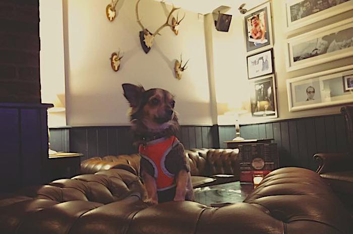 20 dog-friendly Manchester pubs and bars that warmly welcome you and your pooch I Love Manchester