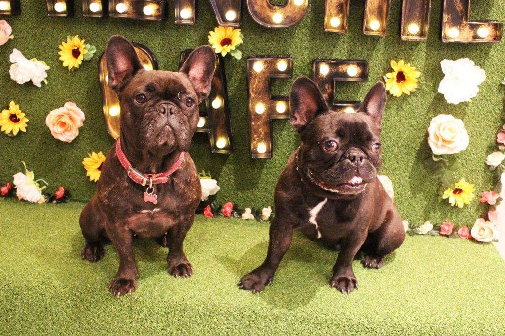 A French bulldog cafe is coming to Manchester: here's how to book I Love Manchester