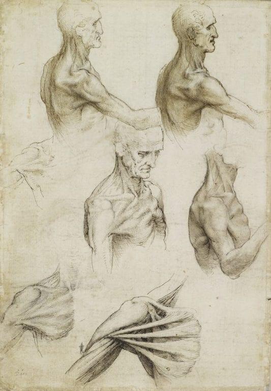 Manchester Art Gallery displays rarely seen Leonardo da Vinci drawings in new exhibition I Love Manchester