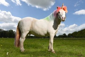 Unicorn Land is coming to Manchester - and adults go free! I Love Manchester