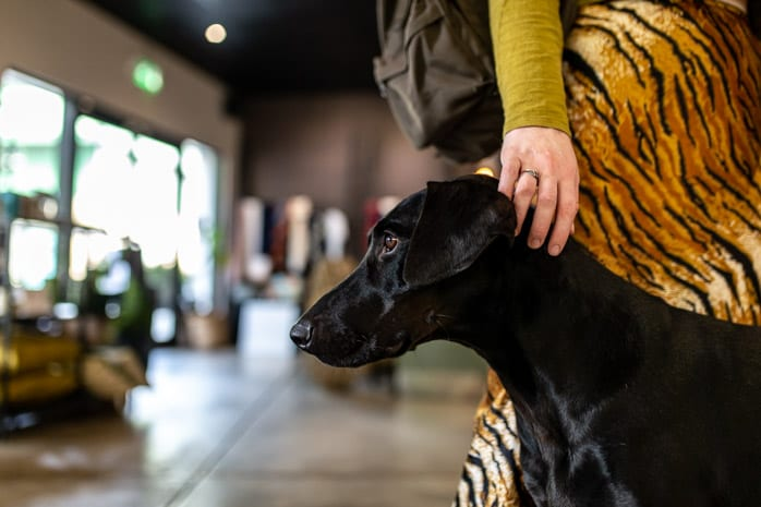 Dogs that go to work: meet the shop dogs of Manchester I Love Manchester