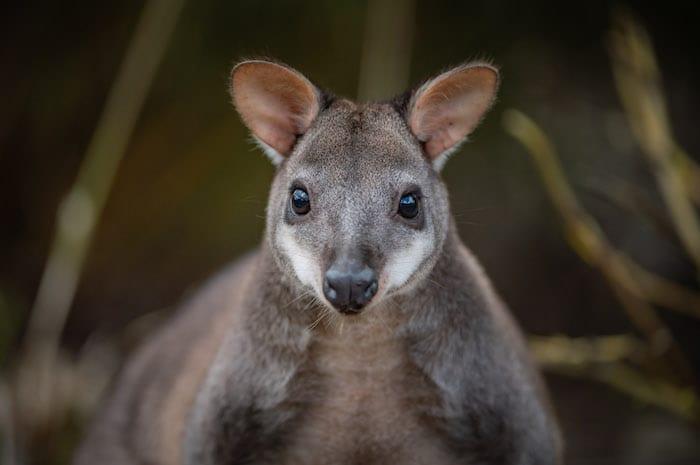 The cute baby animals you have to meet at Chester Zoo this summer I Love Manchester