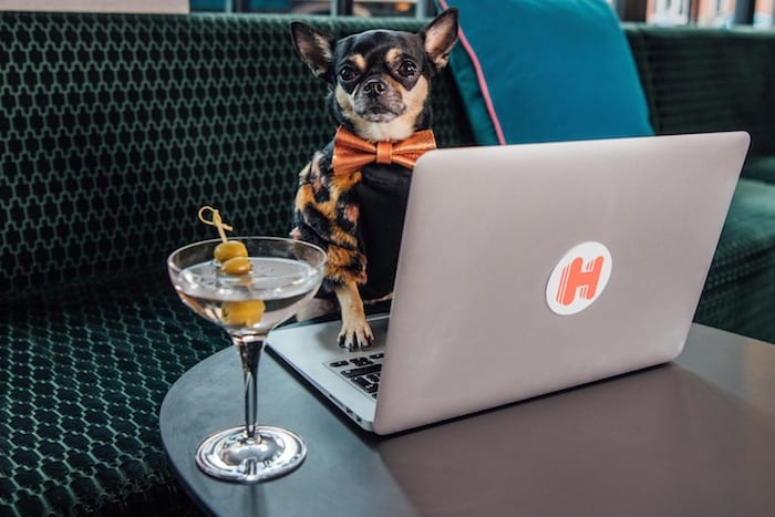 Canine critic wanted! Could your pet pooch be the first ever doggy hotel reviewer? I Love Manchester