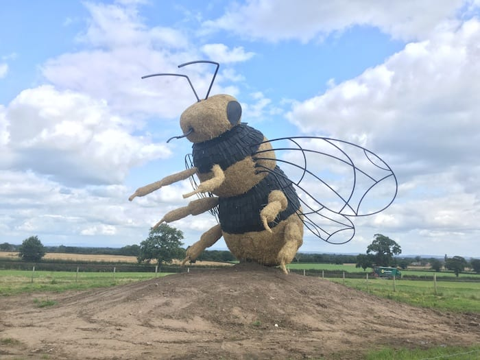 giant bee at snugburys