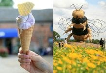 Snugburys ice cream bee