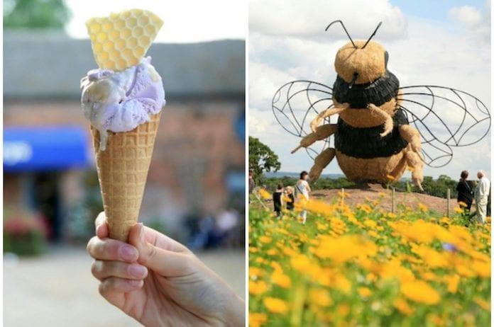 Snugburys ice cream bee