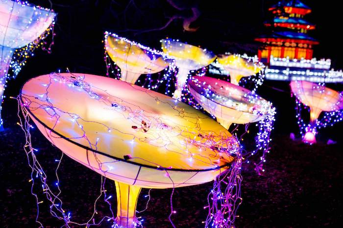 Europe's largest light festival is coming to Manchester this winter I Love Manchester
