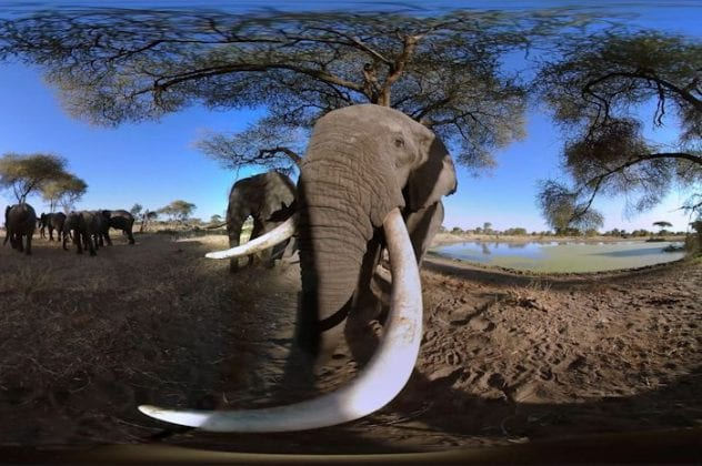 World's first animal virtual reality experience opens at Trafford Centre I Love Manchester