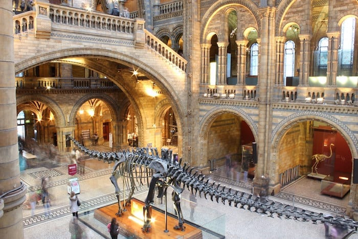 The Natural History Museum's most famous dinosaur is coming to Rochdale I Love Manchester