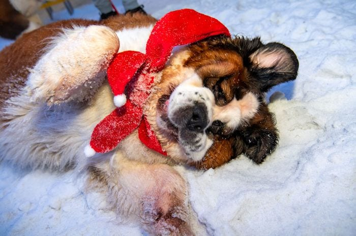 First pop-up cafe for St Bernards in the UK opens at Chill Factore I Love Manchester