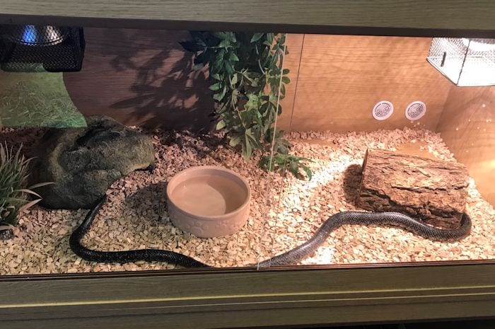 Shocked Middleton resident spots four-foot long Californian king snake in his garden I Love Manchester