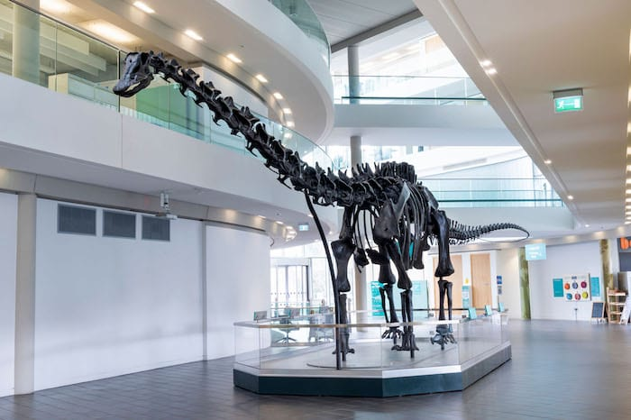 Dippy the dinosaur has arrived in Rochdale and he's even more impressive in person I Love Manchester