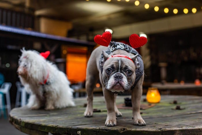 Single dog owners can meet likeminded pooch parents at this Manchester doggy dating event I Love Manchester