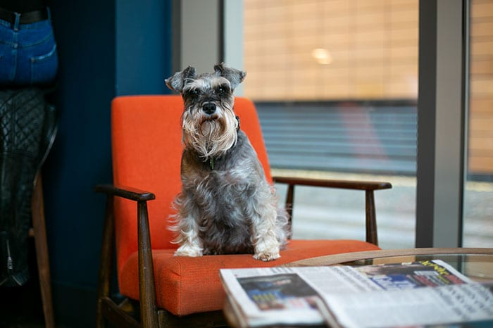 Enjoy a virtual tour of modern new dog-friendly apartments in one of Manchester's coolest neighbourhoods I Love Manchester