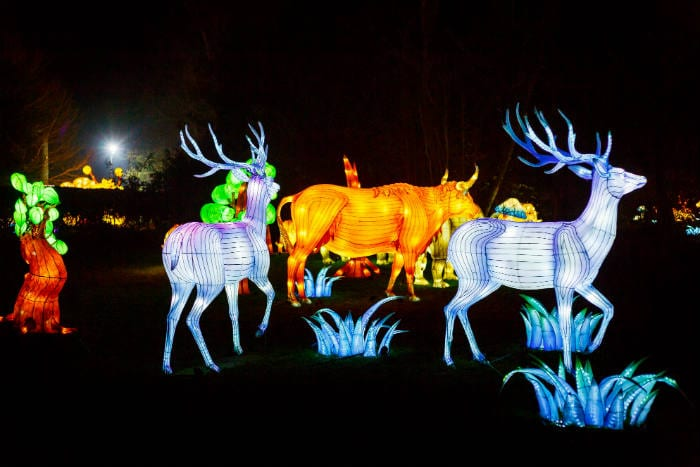 Lightopia will return to Manchester this winter with spectacular new creations I Love Manchester