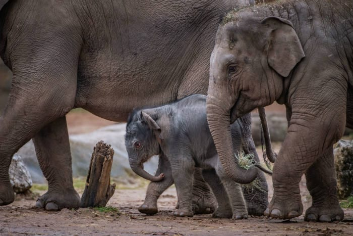 Chester Zoo returns to TV screens in The Secret Life of the Zoo I Love Manchester