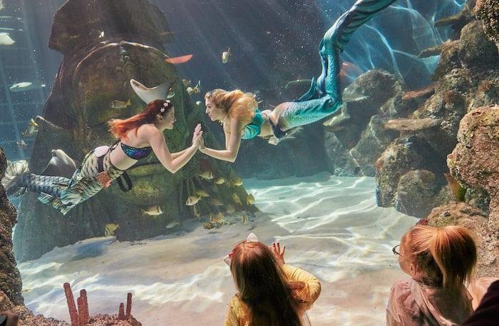 Sea Life mermaids