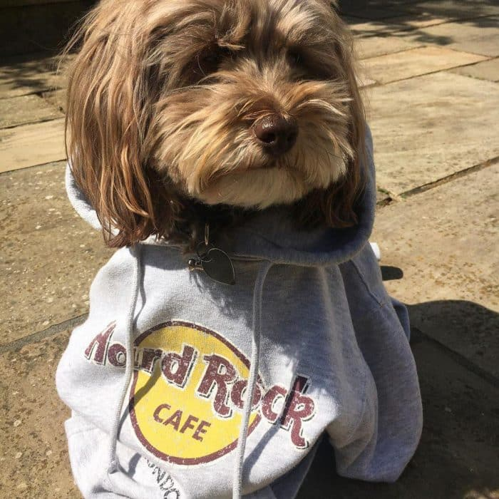 Furry friends are set for a treat with Hard Rock Cafe's new doggy menu